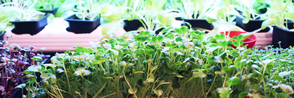 Johnny Greens Farm - HYDROPONIC URBAN FARMING